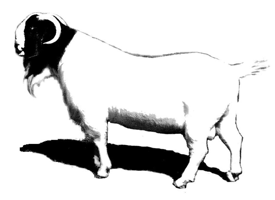 Boer Goat Silhouette - photo#20